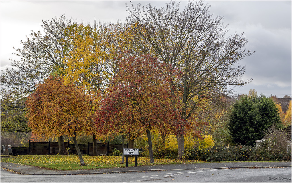 Colours in Sycamore Drive by pcoulson