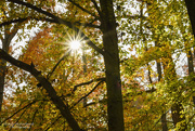 2nd Nov 2018 - God Smiling Through the Trees