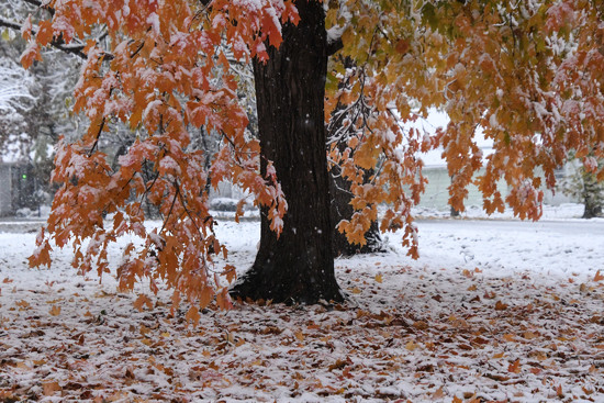 Autumn and Winter Collide by kareenking