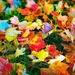 Bid Farewell To Rainbow Leaves