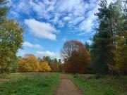 9th Nov 2018 - Hockham Woods