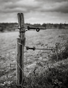 9th Nov 2018 - Paimpont 2018: Day 230 - Occasional Fence Post 33