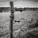 Paimpont 2018: Day 230 - Occasional Fence Post 33 by vignouse