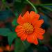 Lingering Bloomsr