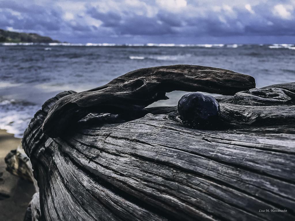 2015-11-26 driftwood on shore near Kahului by lisahans