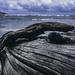 2015-11-26 driftwood on shore near Kahului