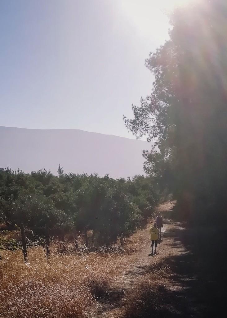 Walking on the Farm by salza