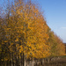 Avenue of tranquility by shepherdman