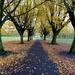 Autumnal Avenue.