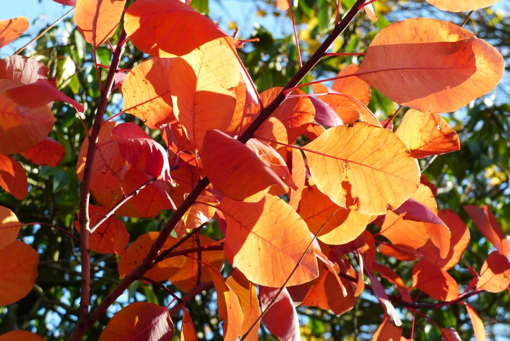 Autumn colour by judithdeacon