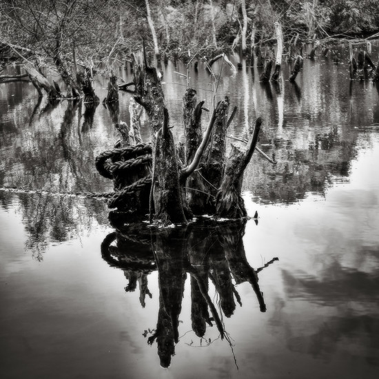 Paimpont 2018: Day 232 - Submerged Tree Stumps by vignouse