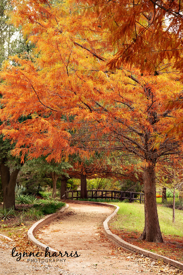 Walk through the Park by lynne5477