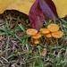 LHG_0484 tiny fungi