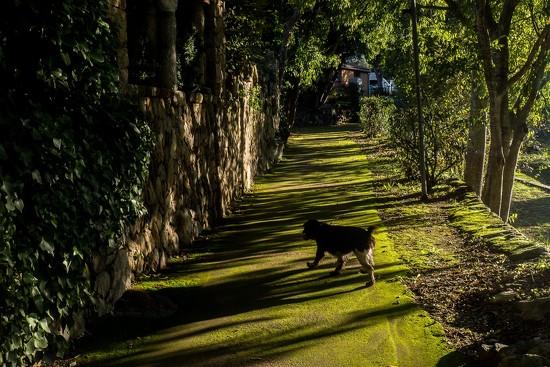 Green lane by laroque