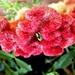 Lijepa biljka
