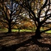 IN THE SHADOW OF THE OLD OAK TREE