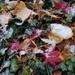 Blending the seasons
