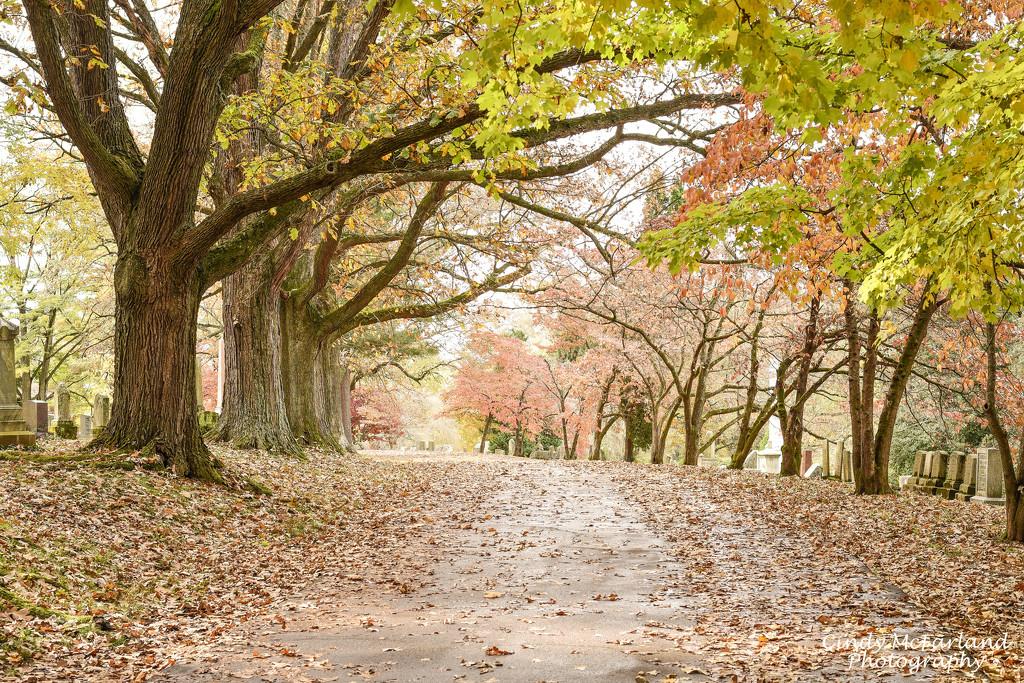 Fallen Leaves by cindymc