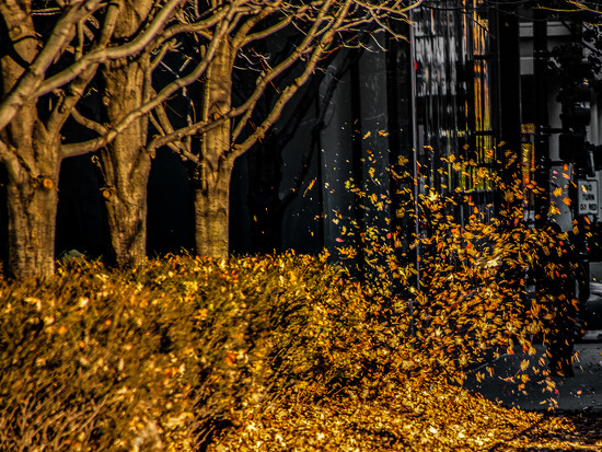 Leaves in Motion by taffy