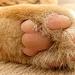 Minky's Paw