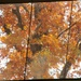 November 11: Autumn Tree