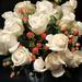 Ann's Roses