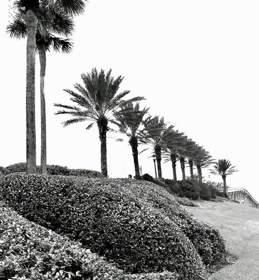 Palms,palms everywhere by joemuli