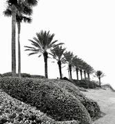 13th Nov 2018 - Palms,palms everywhere
