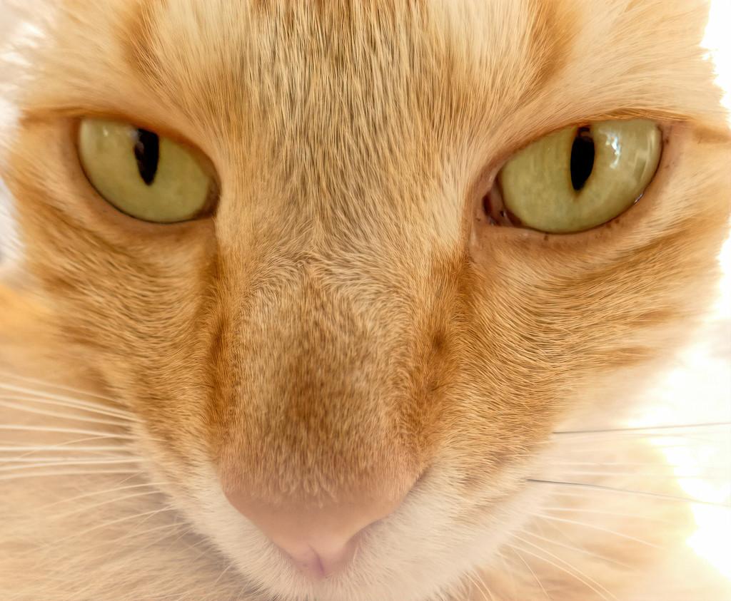 Minky's eyes by ludwigsdiana