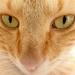 Minky's eyes