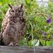 The Owl by salza