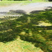 Punga frond shadows