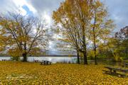 15th Nov 2018 - Golden fall at Redbank