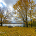 Golden fall at Redbank