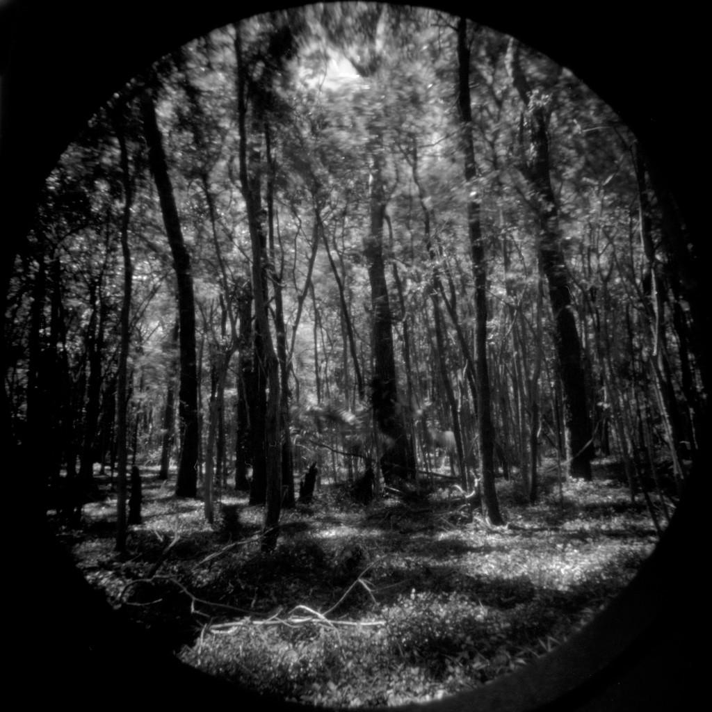 Rainforest floor by peterdegraaff