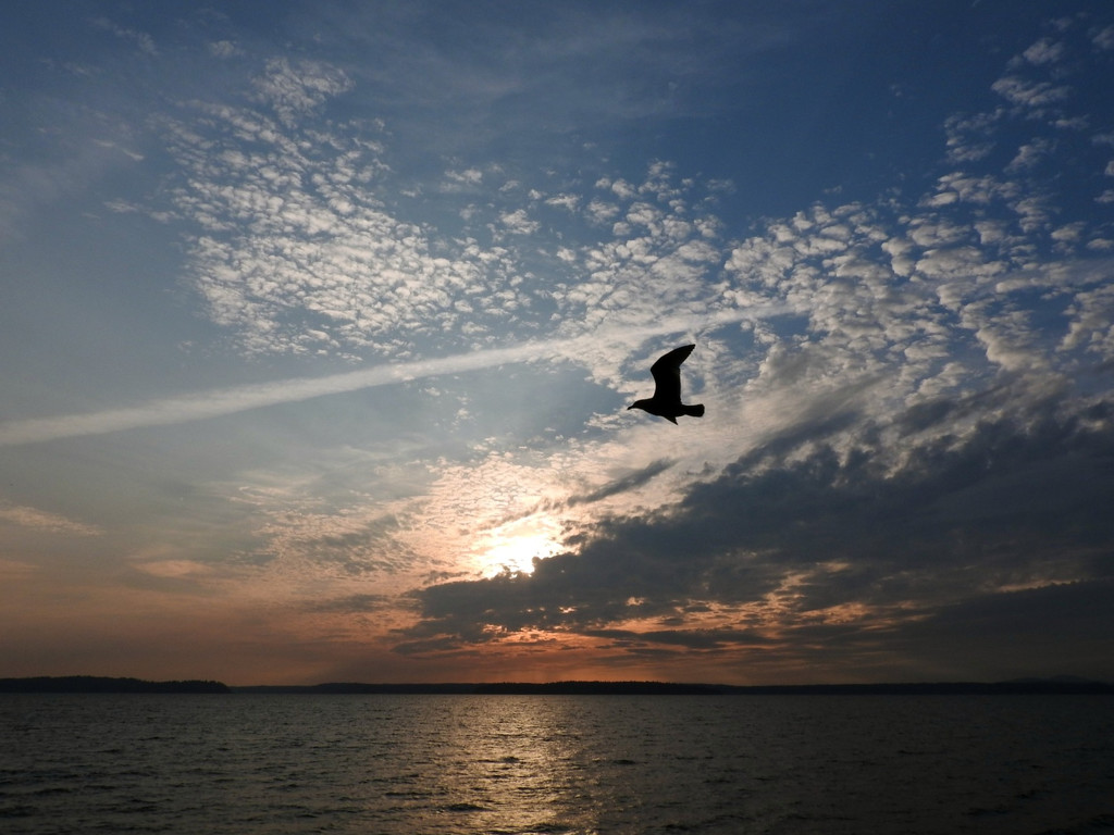 Gull Silhouette by seattlite