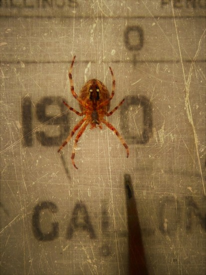 Spider from Mars? by ajisaac