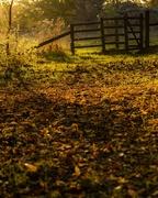 16th Nov 2018 - Autumnal Carpet