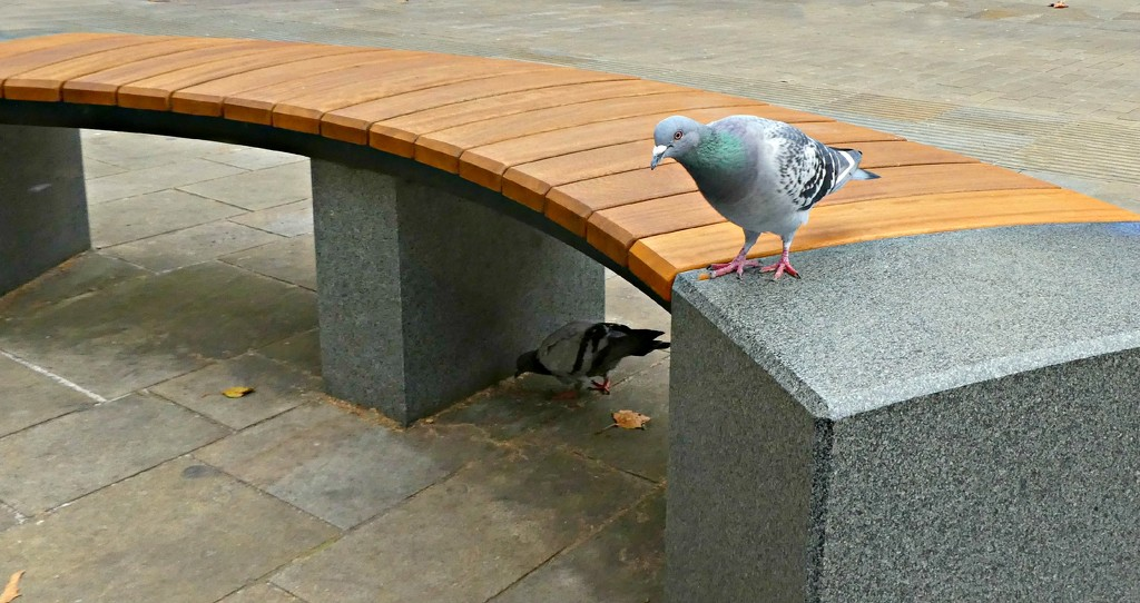Hey Pete She Sez This  Bench Is Mundane. by wendyfrost