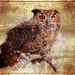 Great Horned Owl by olivetreeann