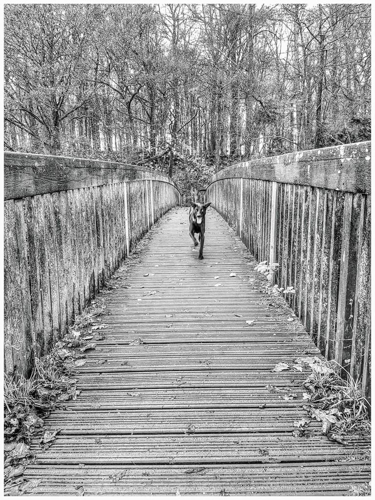 Over the bridge by lyndamcg