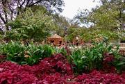 17th Nov 2018 - Coleus, Canna Lilies and the Pumpkin Village at the Dallas Arboretum