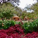 Coleus, Canna Lilies and the Pumpkin Village at the Dallas Arboretum
