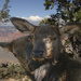 Elk Snuggle  by jgpittenger