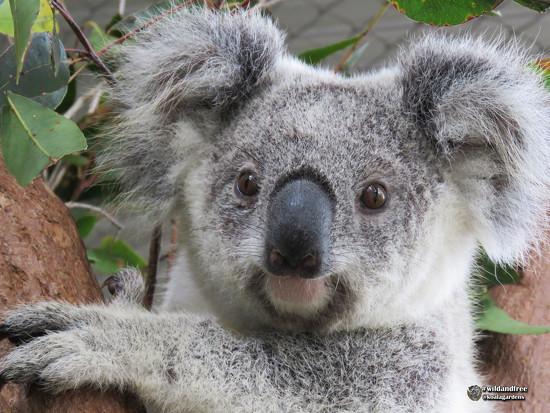 Krissy improving by koalagardens