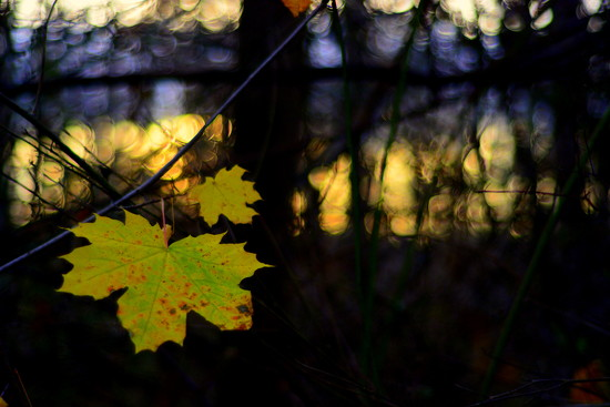 One leaf left hanging... by jayberg