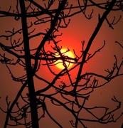 17th Nov 2018 - Truth Is Like The Sun