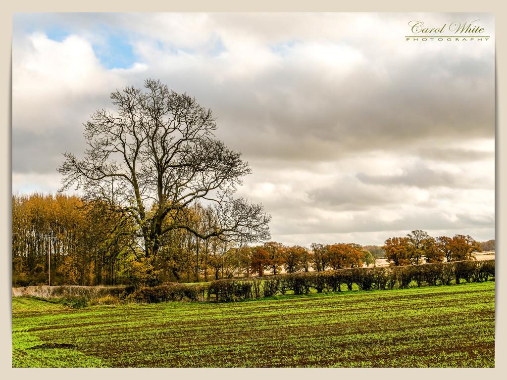 Countryside Autumn Scene by carolmw