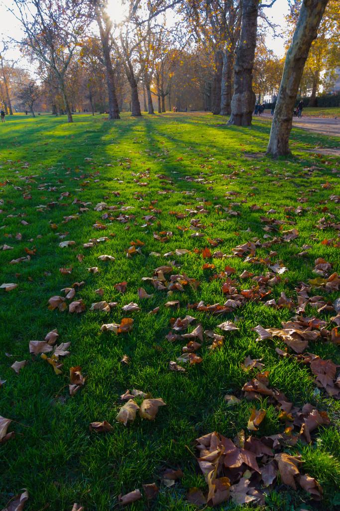 Green Park by rumpelstiltskin