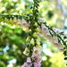 twisted foxgloves